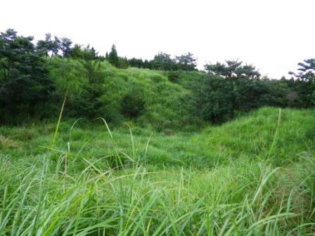 高原2009年植栽地(20109月撮影)