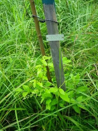 2009年植栽苗木